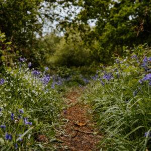 "How do I follow St. Thérèse's ""Little Way""?"